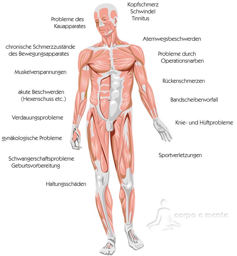 Berühmt Muskeln Mensch Zeitgenössisch - Anatomie Von Menschlichen ...